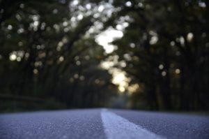 Visuel d'une route arborée d'arbres