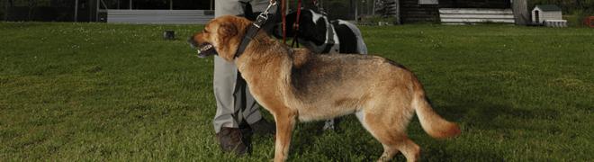 centre-recueil-canin-agglo-cobas