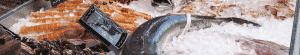 Etal de poissons avec de la glace